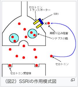 sinapus-02