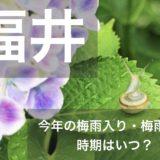 hukui-tsuyu