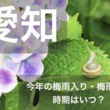 aichi-tsuyu