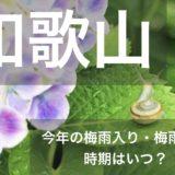 wakayama-tsuyu