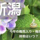 niigata-tsuyu