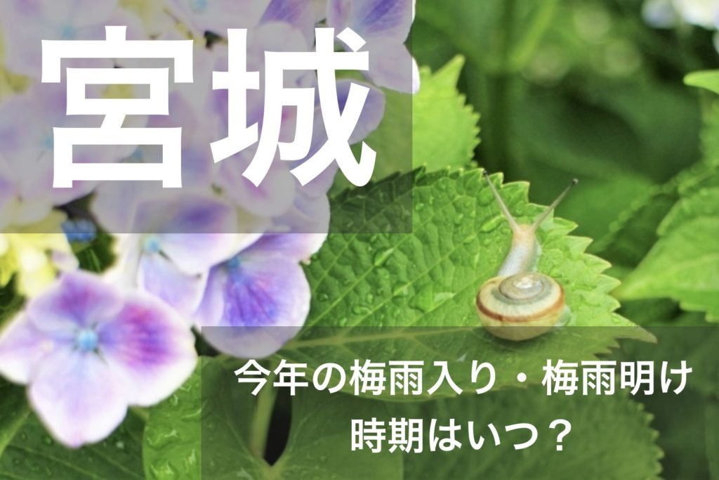 miyagi-tsuyu
