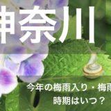 kanagawa-tsuyu